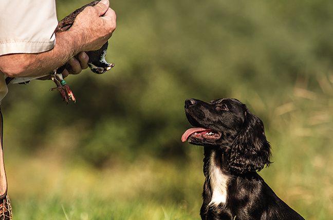 Choosing A Trainer For Your Gun Dog