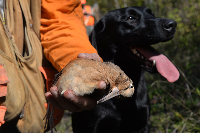 Hunter with woodcock and lab
