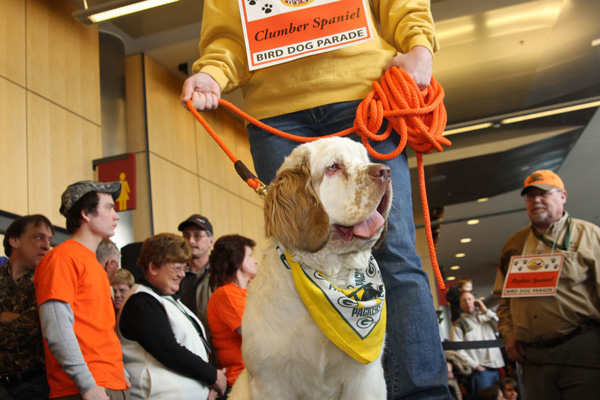//www.gundogmag.com/files/8-rare-bird-dog-breeds-at-pheasants-forevers-national-pheasant-fest/clumberspaniel_1.jpg