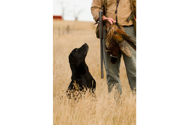 //www.gundogmag.com/files/all-in-a-days-work-hard-hunting-lab-photos/labs_003.jpg