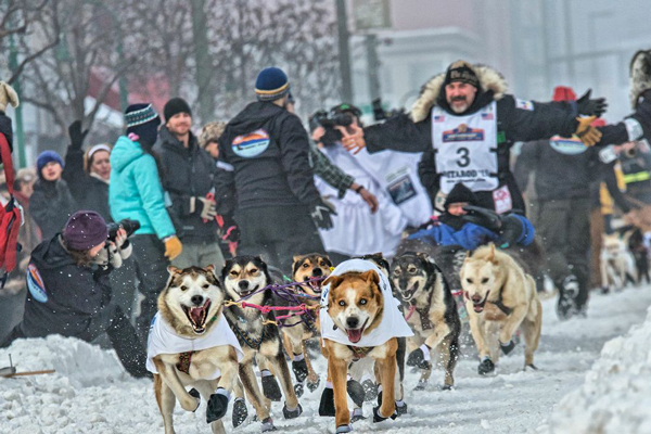 //www.gundogmag.com/files/dogs-of-iditarod/09_iditarod.jpg