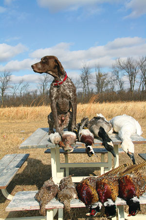 //www.gundogmag.com/files/gun-dogs-breed-profiles/german_shorthaired.jpg