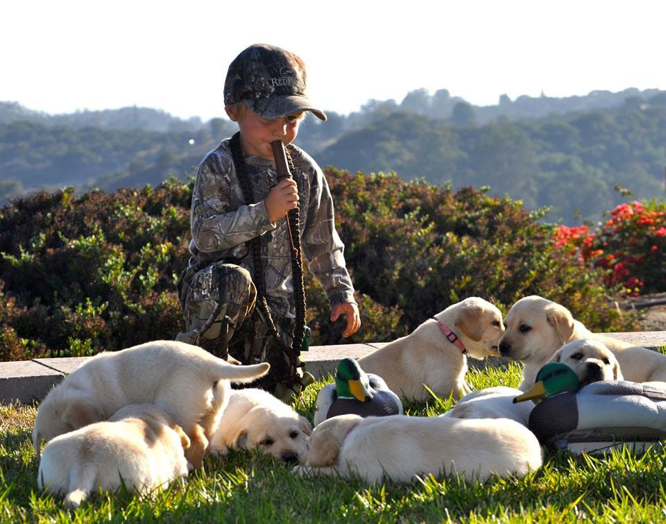 //www.gundogmag.com/files/gun-dogs-favorite-reader-puppy-photos/colt-wells.jpg