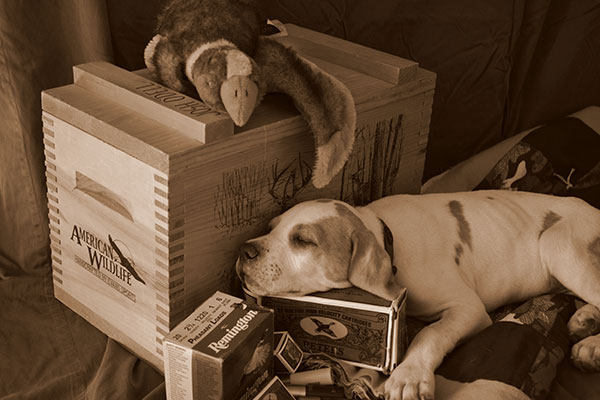 //www.gundogmag.com/files/gun-dogs-favorite-reader-puppy-photos/josh-and-jennifer-odell.jpg