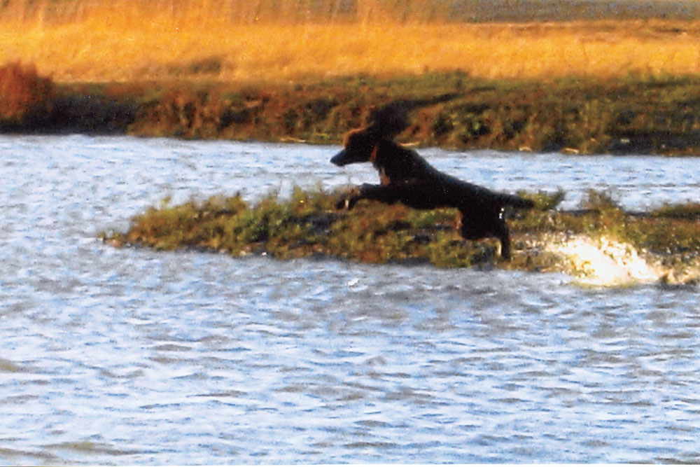 //www.gundogmag.com/files/gun-dogs-salute-to-water-dogs/penny_hurley.jpg