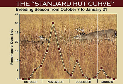 Factors That Can Impact The Rut