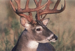 Trophy Whitetails Forever