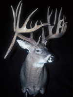 Kentucky's Biggest Buck Of 2006: The Pennyrile Surprise