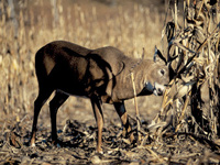 Want to turn more of your big-buck sightings into shot opportunities? Here are some time-tested ways to do it.
