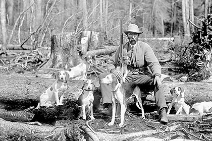 To some, hunting whitetails with dogs is a rich tradition that has been around since colonial days, and for those hunters there is nothing more exciting than hearing the music of the dogs as they get on the trail of a deer. To others, hunting deer with dogs is an annoying and outdated method of hunting that ought to be outlawed. Here is an in-depth look at dog deer hunting in America today.