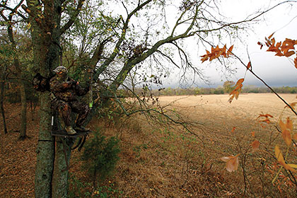 Are You Overpressuring Your Best Hunting Stands?