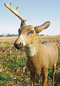 Whitetail Trophy Decoying Myths Debunked