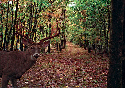 The Advantages of a Wireless Trail Camera