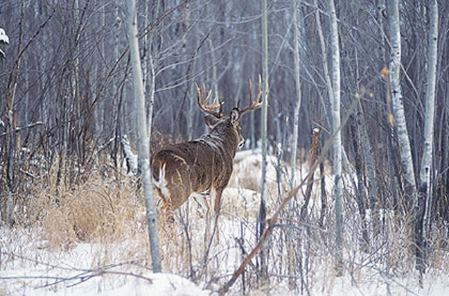 out-think-a-giant-buck