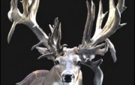 "The mount of this famous whitetail is now part of the ""King of Bucks"" collection, which is in the Wonders of Wildlife display at the American National Fish & Wildlife Museum in Springfield, Missouri. Mount photo by Chris Irwin, Bass Pro Shops"