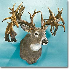 World Record Whitetails: Rumor Vs. Reality (Part 2)