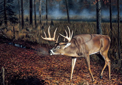 "The author believes that scrapes are made by rutting bucks as a place where does in heat can come together with rutting bucks. Furthermore, the author believes that the age of a buck determines what kind of scrape he will make. In other words, there is a significant difference in a scrape made by a 1 1/2-year-old ""youngster"" and one made by a 5 1/2-year-old ""bull of the woods,"" like the one depicted in this illustration. Illustration titled ""Who's Been Here?"" by Brian Kuether, courtesy of Northern Promotions, Inc. For information on this print, visit www.northernpromotions.com."
