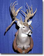 Texas' Most Unusual Buck?