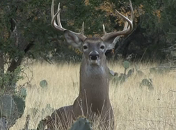 Dr. James Kroll and Tom Boyer of Boss Buck Feeders head to Mustang Creek Ranch in central Texas in