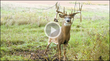 what is the biggest deer ever