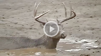 Watch the rescue of a 10-point buck that found itself stuck in a half-frozen sediment pond in