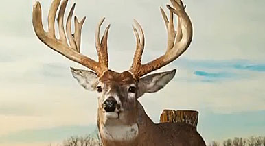 VIDEO: Monster Missouri Trophy Whitetail