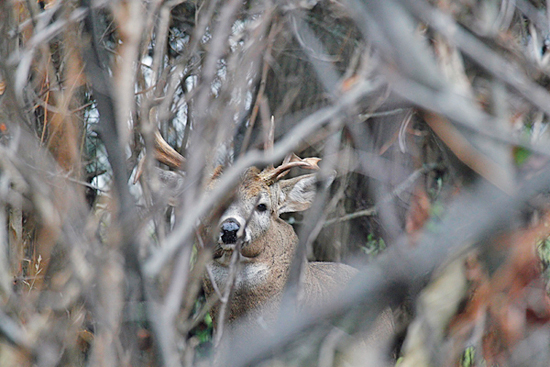 Five Keys to Hunting a Whitetail Sanctuary