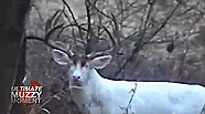 The biggest albino deer ever might be this protected brute that was captured on tape and observed