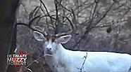 Biggest Albino Deer Ever?