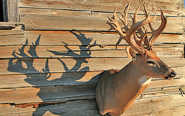 The Boone & Crockett Club recently conducted a study that compared trophy whitetail numbers