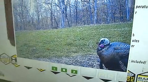 Darrin Simmons of Bushnell walks us through the Trophy Cam HD series of trail cameras.