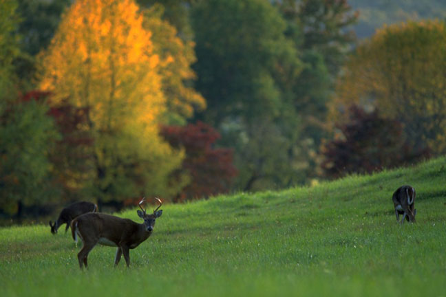 whitetail nutrition through the year