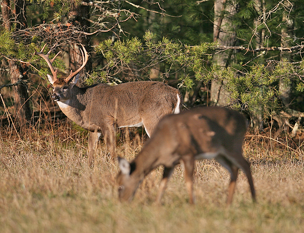 Sometimes, lower is still pretty high.  That's the case with Indiana's most recent deer harvest