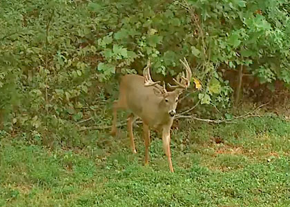 Read more on 2014 kentucky deer hunting: big boy youtube .