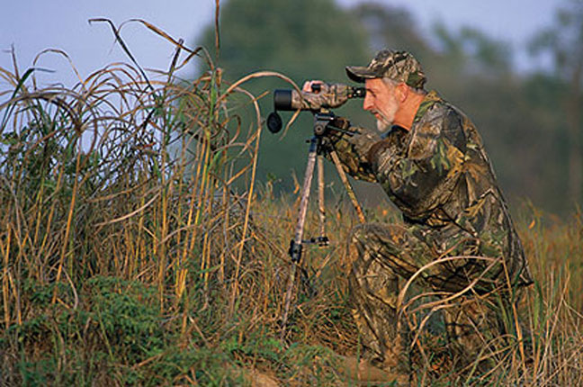 scouting-for-whitetail