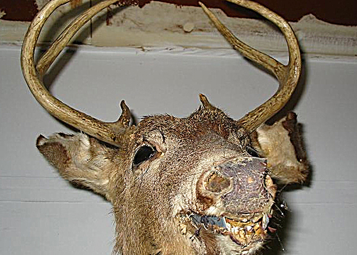 NAW's Best of the Worst Whitetail Taxidermy