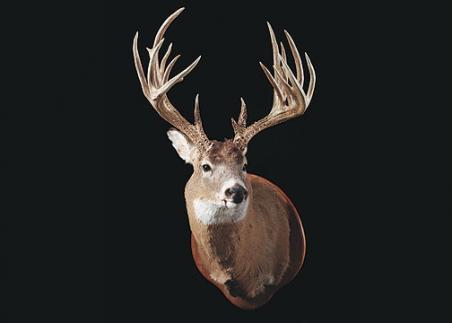 Score this Buck Contest: Kansas Giant