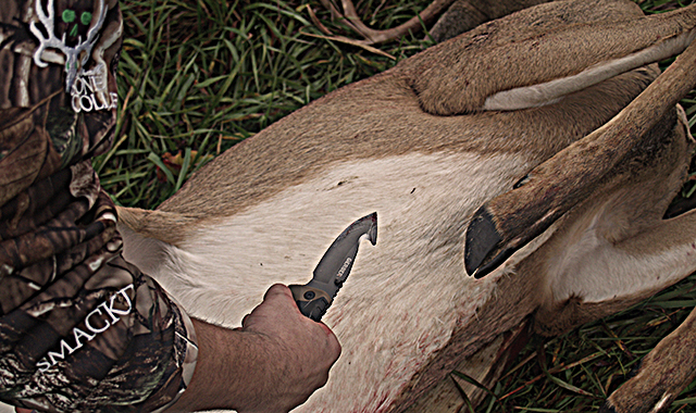 Field dress whitetail