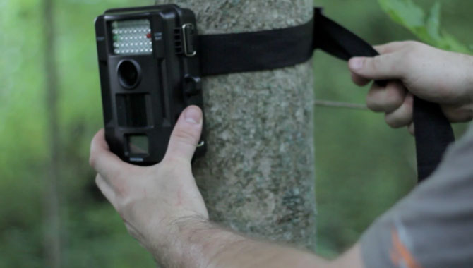 Guide to Off-Season Trail Cameras