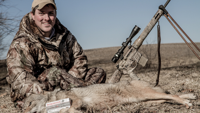 10 Best ARs for Predator Hunting