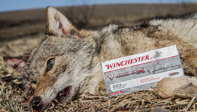 The Best Predator Ammo for 2014