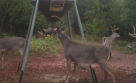 There's no doubting a buck's toughness. From shattered skulls and missing eyeballs to split tines