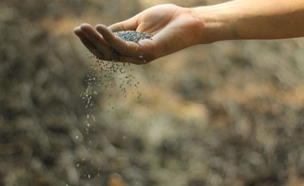 seed-in-hand_5