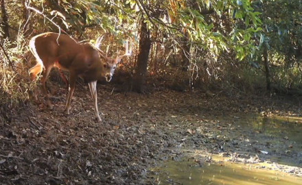 This somber but amazing Muzzy Moment shows the demise of a buck that succumbed to the devastating