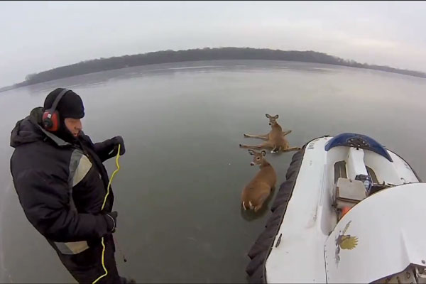 Muzzy Moment: Triple Whitetail Rescue