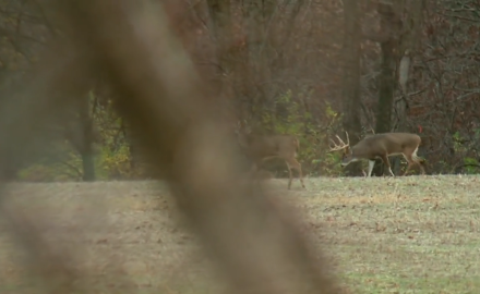 Stan Potts goes head to head with a monster whitetail on a rut bowhunt with Illinois' Sugar Creek