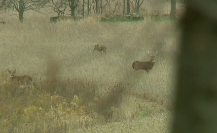 Stan Potts offers insight into calling and rattling deer.
