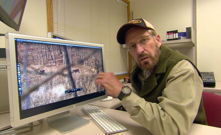 Dr. James Kroll breaks down post-rut buck behavior with the help of some video taken from a hunt.