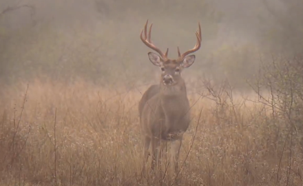Dr. James Kroll talks about the role of DNA testing in determining breeding habits in deer.