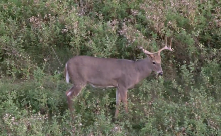 Gordon Whittington hunts central North Dakota during the opening show of bow season with Coteau